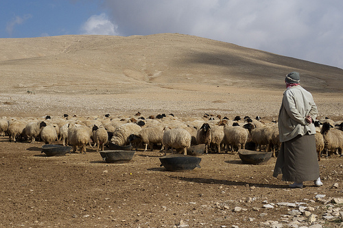 Rural life in Syria was hit hard by drought from 2006 to 2011